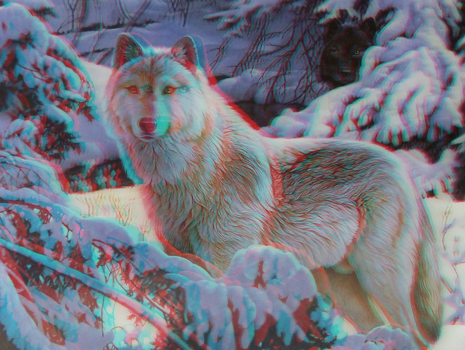 Wolf-in-Snow-Faithful-Friends-3D-anaglyph-photograph