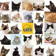 1000 Piece Jigsaw - Cats Protection