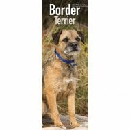 2021 Slim Calendar-Border Terrier