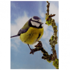 3D Notepad Blue Tit