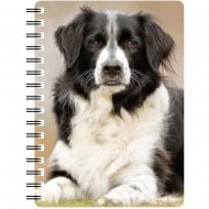 3D Notepad Border Collie