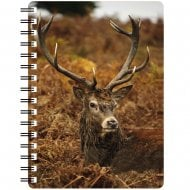 3D Notepad Stag Lying