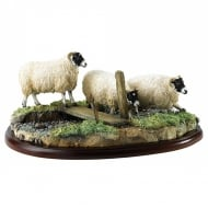 Black Faced Ewes Sheep Figurine