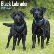 Black Labrador Retriever Wall Calendar 2019