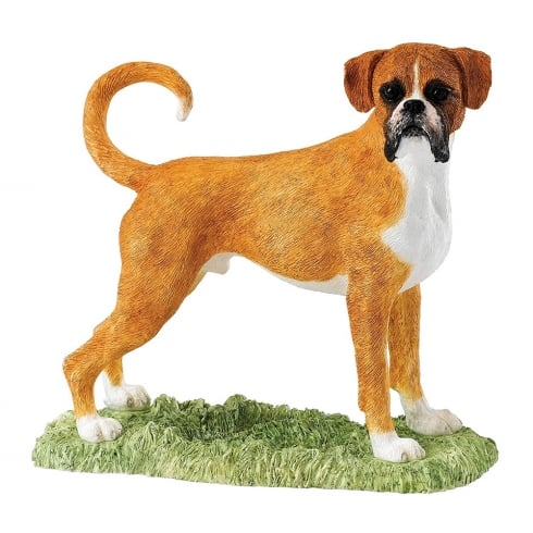 Border Fine Arts Boxer Fawn & White Dog Figurine