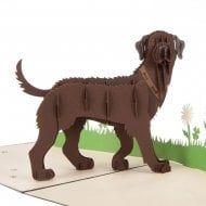 Brown Labradors Dog Pop Up Card