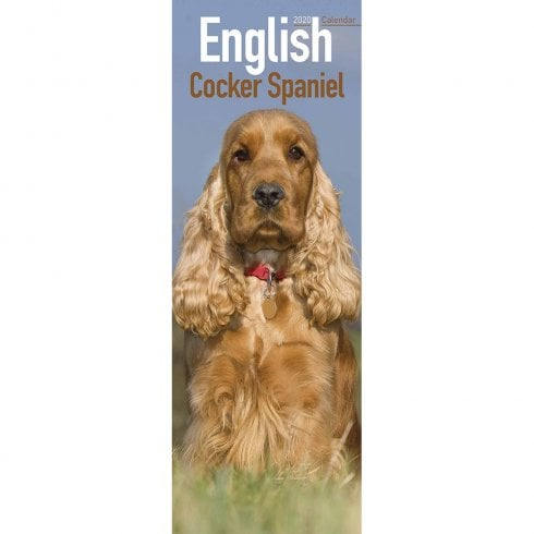 Otter House English Cocker Spaniel Slim Calendar 2020