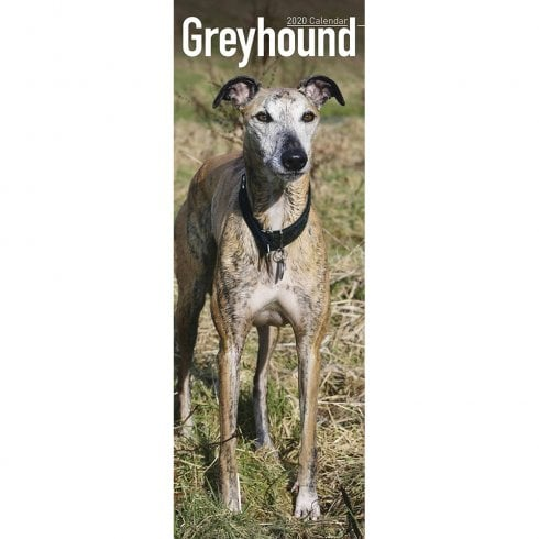 Otter House Greyhound Slim Calendar 2020