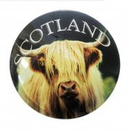 Highland Coo Glass Magnet
