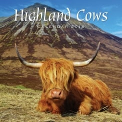 Highland Cows Wall Calendar 2019
