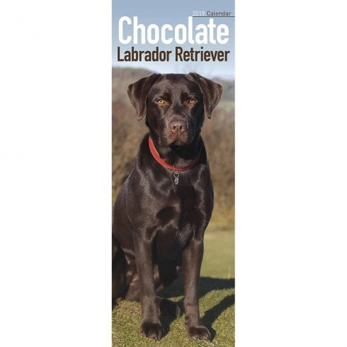Labrador Retriever Chocolate Slim Calendar 2019