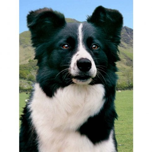 Faithful Friends Collectables Lenticular 3D Picture Border Collie 2