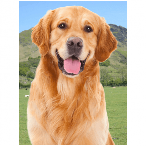 Faithful Friends Collectables Lenticular 3D Picture Golden Retriever