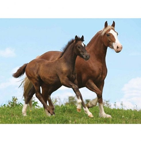 Faithful Friends Collectables Lenticular 3D Picture Horses Mare & Foal