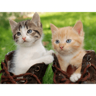 Lenticular 3D Picture Kittens 2