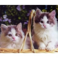 Lenticular 3D Picture Kittens 3