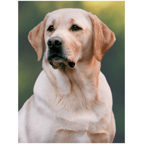 Faithful Friends Collectables Lenticular 3D Picture Labrador Yellow