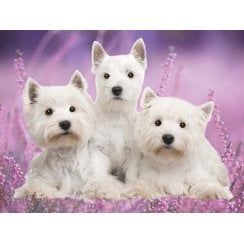 Lenticular 3D Picture Westie (3 Together)