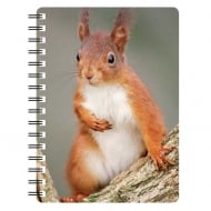Red Squirrel 3D Notebook