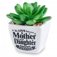 Sentiment Succulent - Mother & Daughter