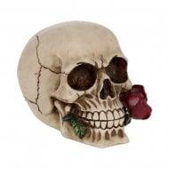 Skull - Rose From The Dead 15cm