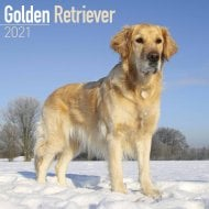 Square Wall Calendar 2021 - Golden Retriever