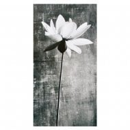 White Lily With Sympathy Bereavement Card 11372408